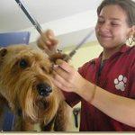 Fachkraft-fuer-Hundegesundheit-und-Pflege