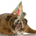 Hundefriseur-Jahreswechsel-2014