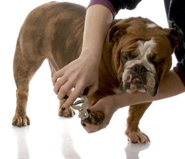 Hundefriseur-werden