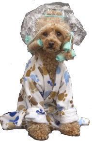 Hundefriseur-Ausbildung