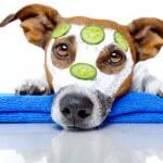 Hundefriseurausbildung-2013