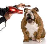 Newsletter für Hundetrainer 2012