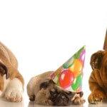 Glückwunsch für den Start ins neue Jahr 2012